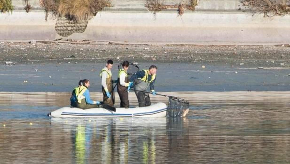 Casa de Campo: El Ayuntamiento usa descargas eléctricas para aniquilar a los 14.000 peces del lago de la Casa de Campo