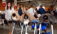 Más de 3.500 perros en la Exposición Internacional Canina de Otoño de Talavera