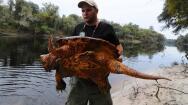 Florida protegerá a 57 de sus especies autóctonas más amenazadas