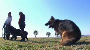 ESTEVE Veterinaria lanza el primer fármaco que previene y trata la leishmaniosis canina