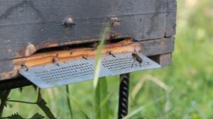 Los peligros que acechan a las abejas