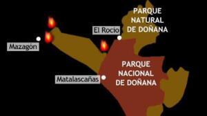 Los linces de Doñana también en peligro por el fuego