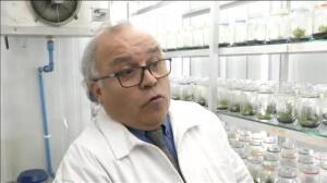 Científicos chilenos descubren unas flores que protegen del sol