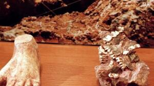 Nuevas huellas de homínidos ponen en duda la evolución humana